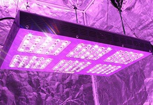 A hydroponic system with a solar light is a good option for growing plants faster