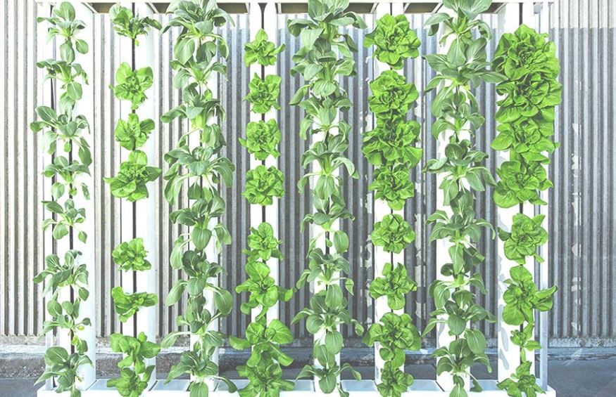 How can vertical farming indoor farming save time and money?
