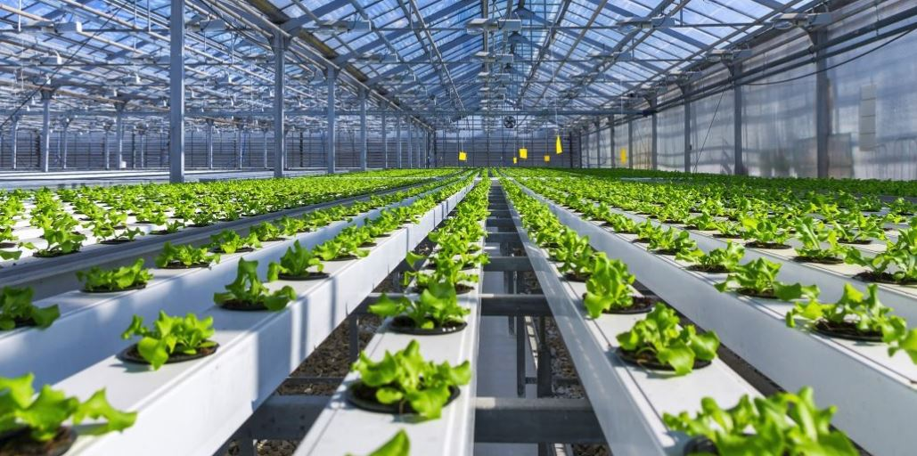 New technology in hydroponics is helping farmers to get a better harvest