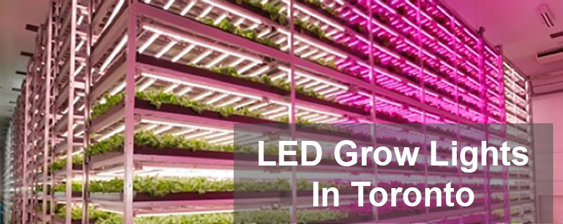 LED Grow light helping growers to be more productive