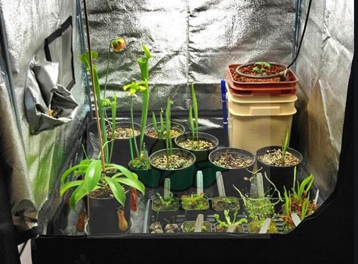A Grow tent can speed up the growth and help grow quality plants