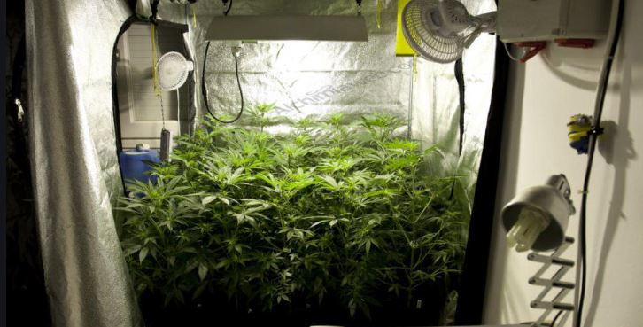 How can you use grow Tent to grow marijuana fast